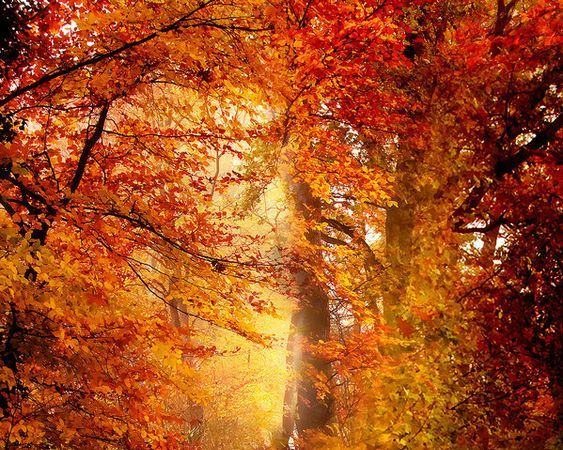 Énergie de l'automne